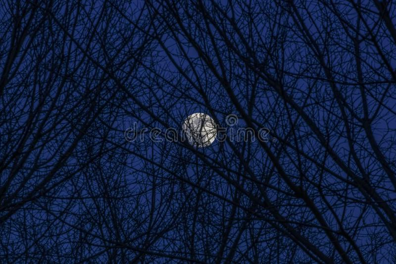 Bright moon behind some bare tree branches. stock photography