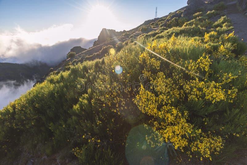 Bright morning scenery stock photos