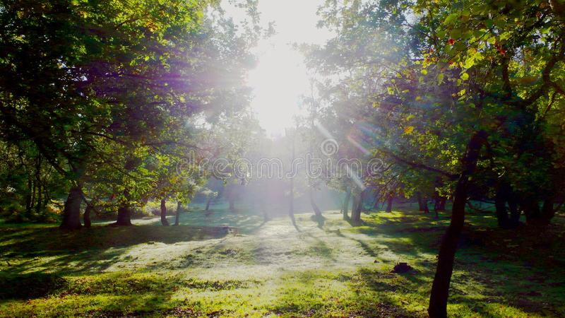 Bright morning sunlight. Artistic picture with bright coloured early morning sun rays shining between trees in a forest stock photo