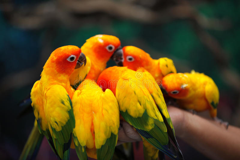 Bright multi-colored parrots sit on a branch royalty free stock photography