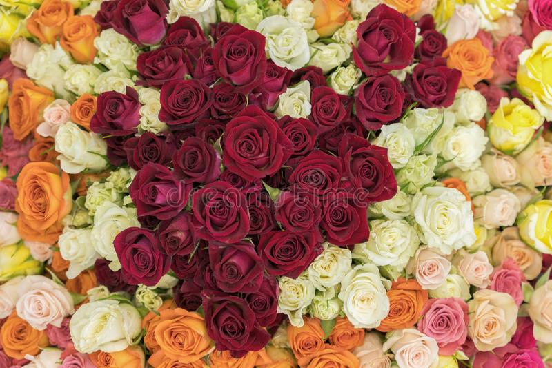 Bright multicolored bouquet of roses. Multicolored fresh roses background. Plenty of colorful bright roses close up stock photos