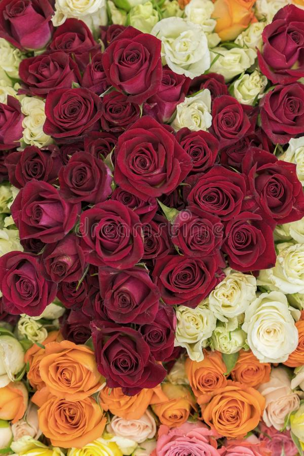 Bright multicolored bouquet of roses. Multicolored fresh roses background. Plenty of colorful bright roses close up. vertical royalty free stock photos