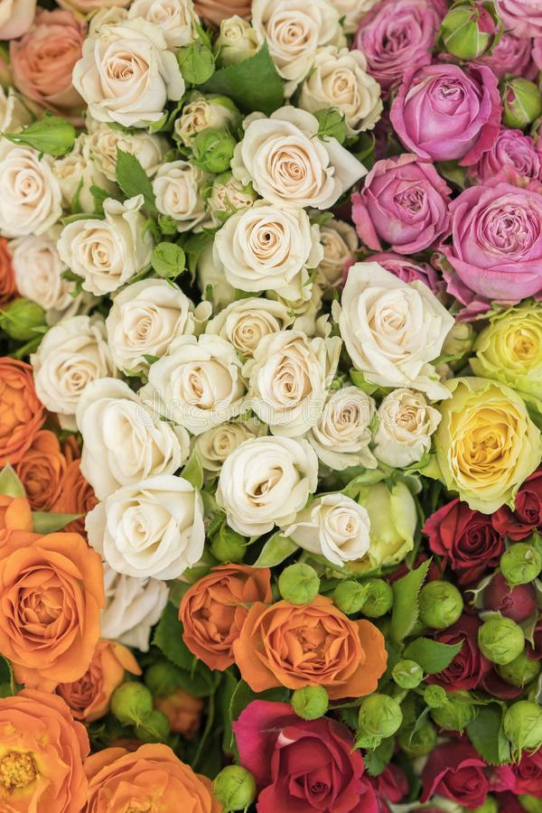 Bright multicolored bouquet of roses. Multicolored fresh roses background. Plenty of colorful bright roses close up. vertical. Photo stock images