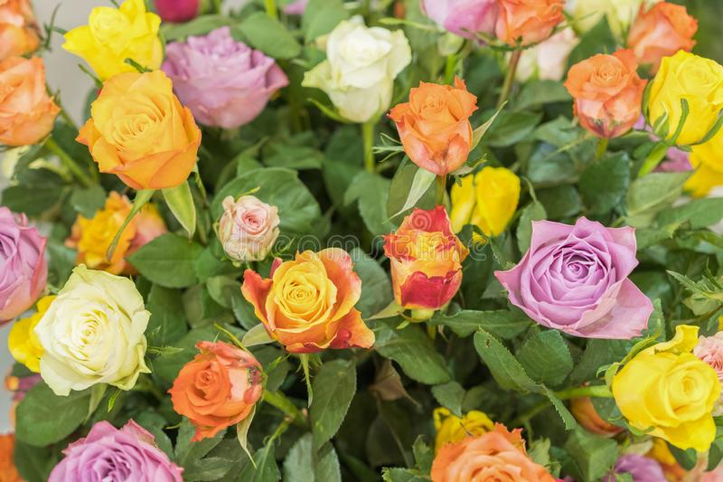 Bright multicolored bouquet of roses. Natural flowers background, soft focus. Colorful roses flower background, group of royalty free stock images