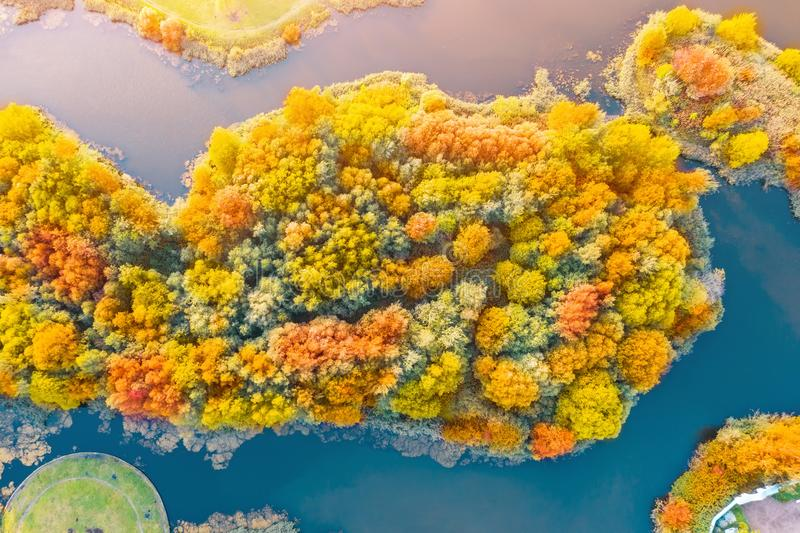 Bright multicolored trees, green, orange and reddish tint. Island in a pond in autumn and a beautiful park, aerial top view look royalty free stock photos