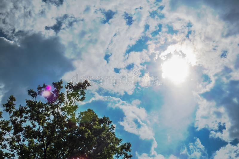 Bright noon sun, clouds, and treetop stock photography