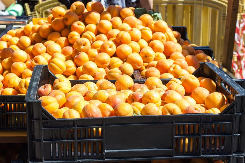Bright orange apricots in two boxes for sale on Apricot Fair in Porreres, Mallorca. Spain stock photography