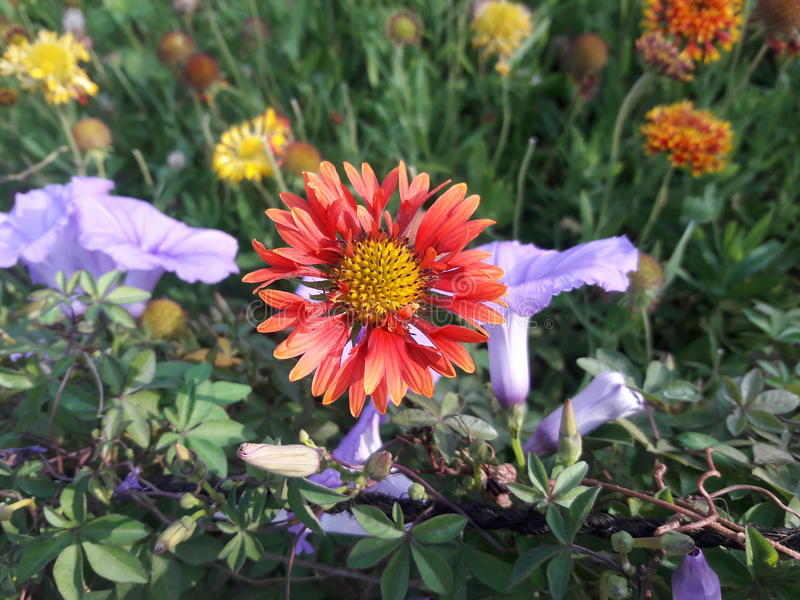 Bright Orange Flower stock photography