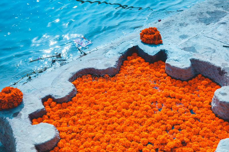 Bright orange flowers offered daily to the river Ganges as thanking ritual. Varanasi, India.  royalty free stock image
