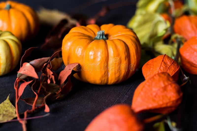 Bright orange mini pumpkins for halloween on black background royalty free stock photos