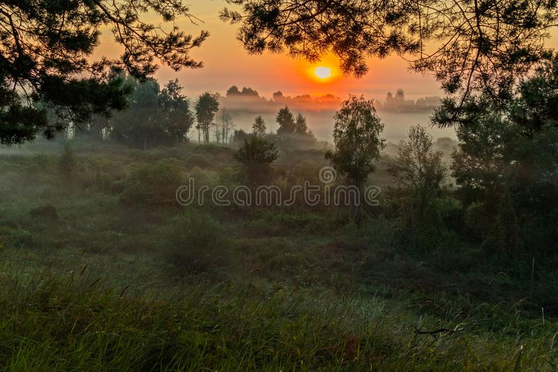 Bright, orange morning sun makes fog disappear in the forest. For your design royalty free stock photo