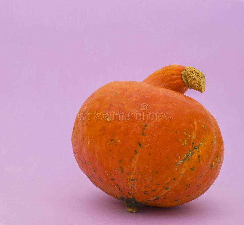 Bright pumpkin on violet background. Bright orange pumpkin on violet background royalty free stock images