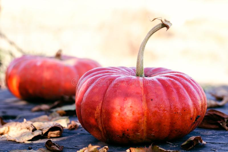 Bright orange pumpkins on an old wooden gray table with dry autumn leaves stock photos