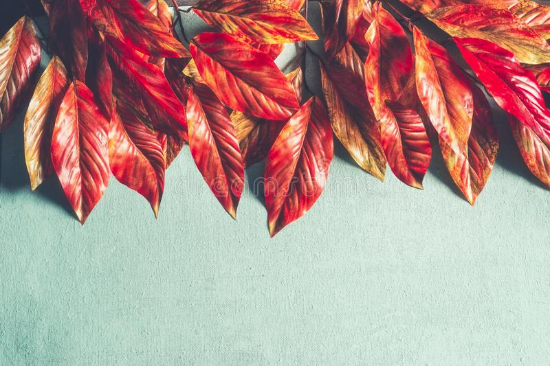 Bright orange red autumn leaves border on turquoise background, top view with copy space. Fall layout royalty free stock images