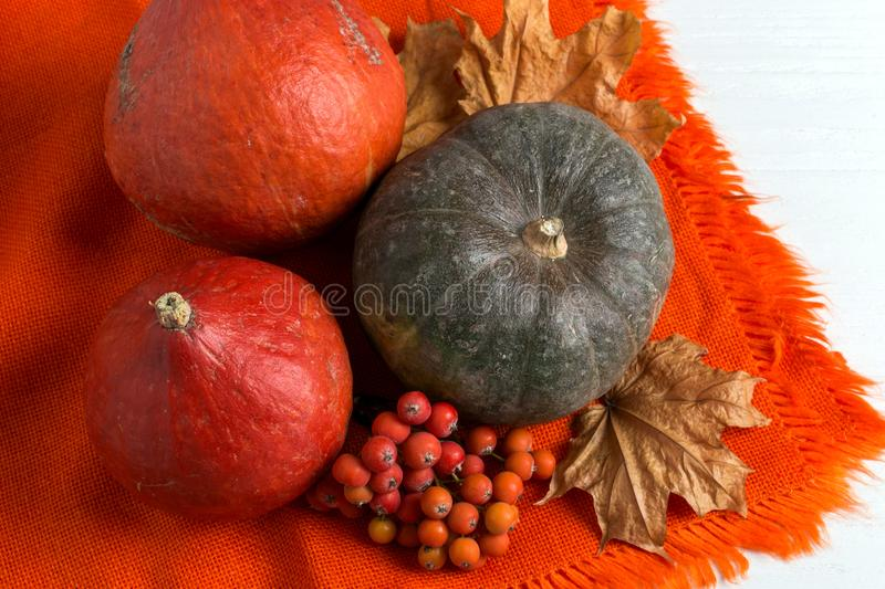 Bright orange warm shawl, pumpkins, berries and dry yellow leaves on a white background, autumn mood, copy space stock photo