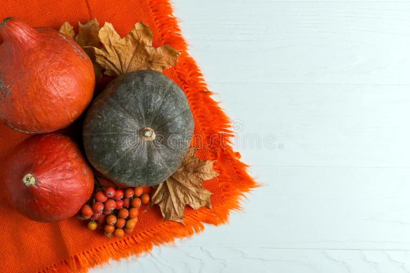 Bright orange warm shawl, pumpkins, berries and dry yellow leaves on a white background, autumn mood, copy space royalty free stock photo