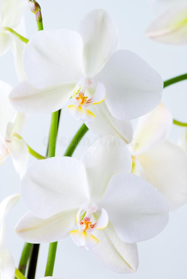 Bright orchid. stock photos