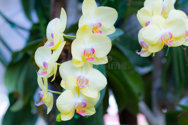 Bright orchids flower royalty free stock photos