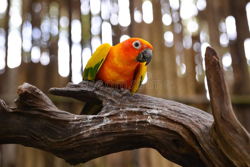 Bright Parrot sitit on branch stock image