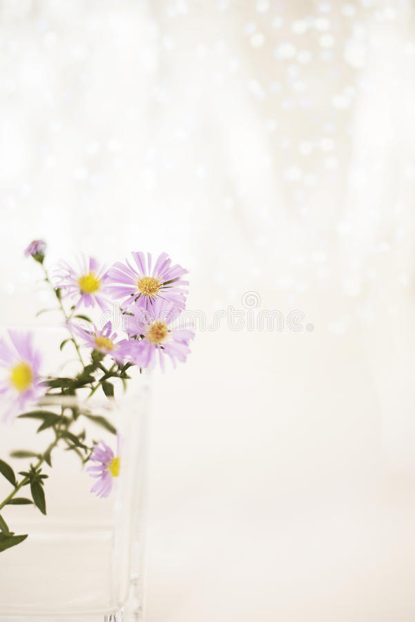 Bright picture of a purple chrysanthemum branch in a glass vase on a white background with bokeh. royalty free stock photos