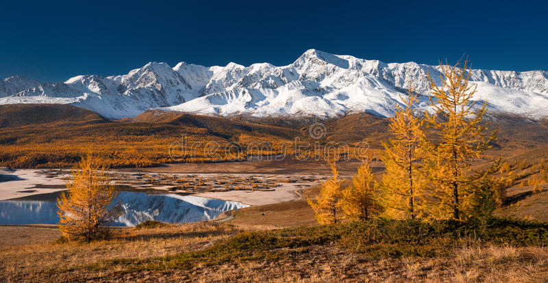 Bright picturesque autumn landscape with mountains covered with snow, forest, yellow larches and beautiful lake with reflections royalty free stock image