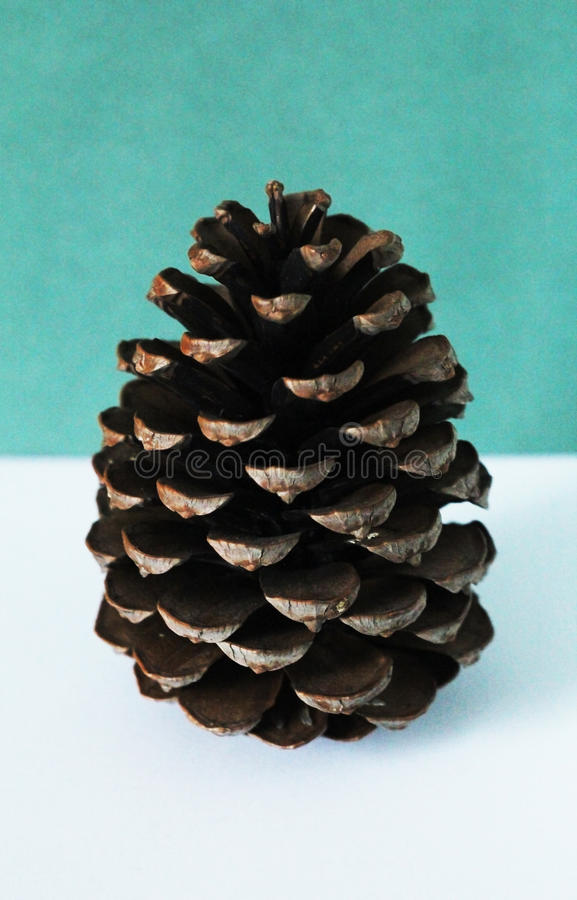 Bright pine cone. Pine cone on bright background stock images