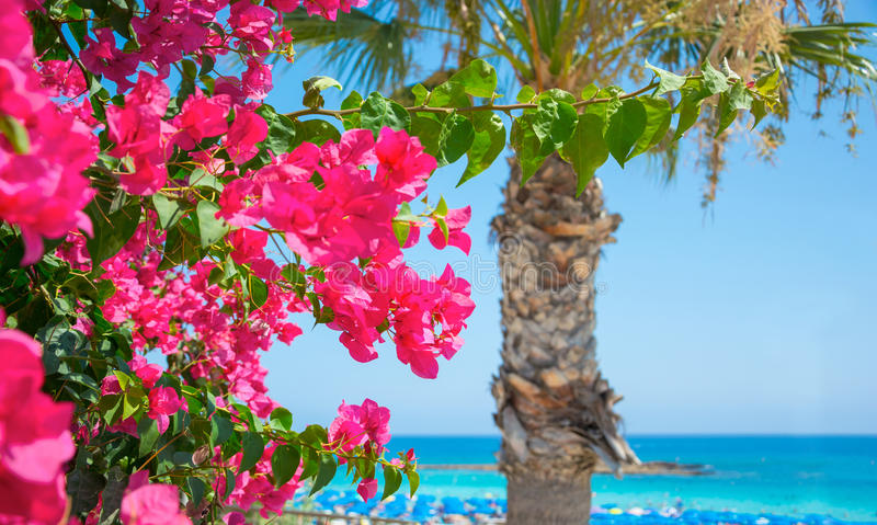 Bright pink flowers and the sea on the coast of Cyprus. Bright pink flowers, palm tree and sea views on the coast of Cyprus royalty free stock photo