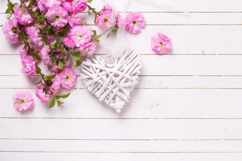 Bright pink flowers and white decorative heart on white pain. Ted wooden planks. Selective focus. Place for text royalty free stock photo