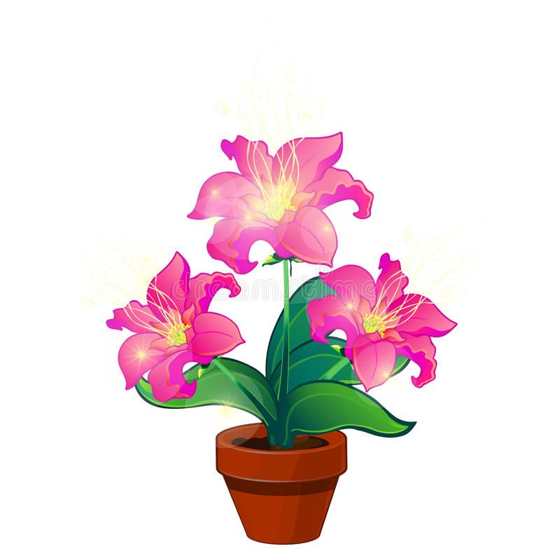 Bright pink magic flowers in pot, vector isolated stock illustration