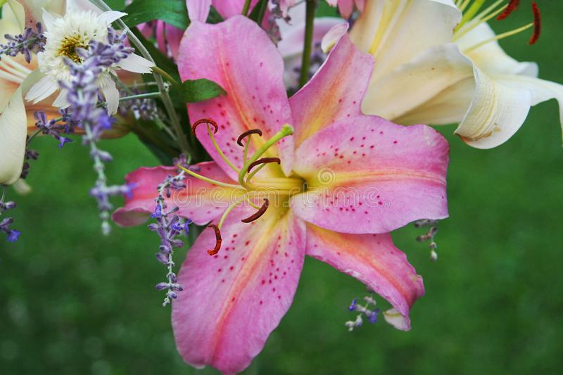 Details of a summer bouquet of lilies and other flowers royalty free stock images