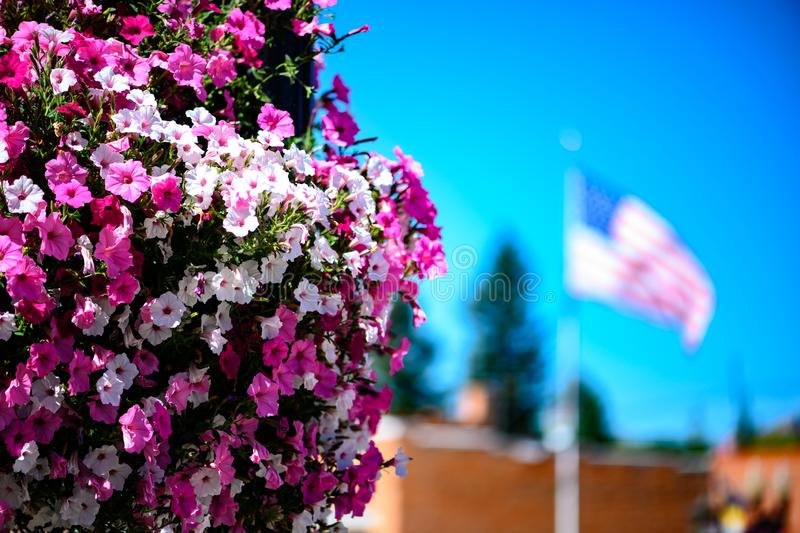 Bright pink petunias and an american flag. Large basket of bright pink and white petunias with a blurred american flag in the background on a sunny day in royalty free stock photos