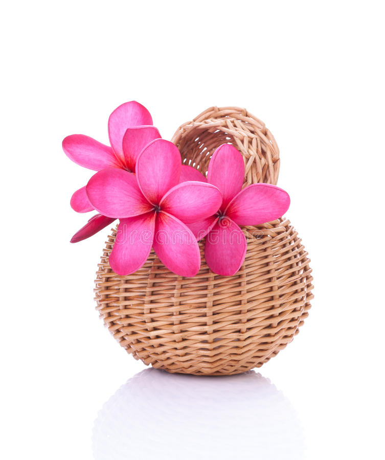 Bright pink plumeria in a rattan basket royalty free stock photos