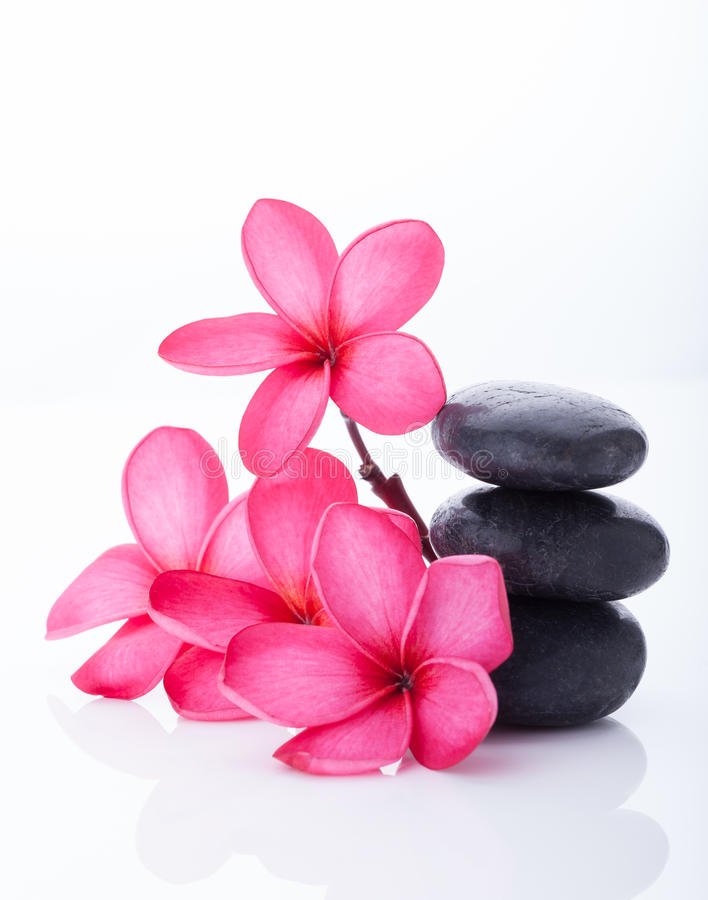 Bright pink plumeria in a rattan basket royalty free stock image