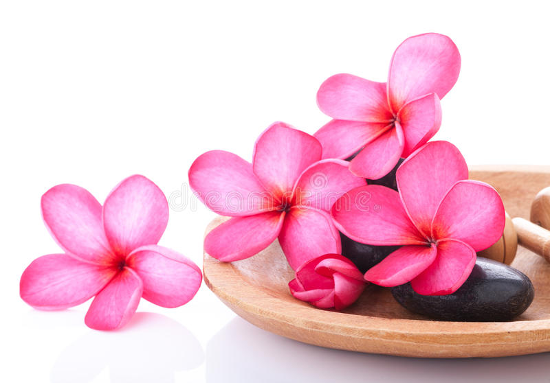 Bright pink plumeria. Spa concept of bright pink plumeria on black stones over white background stock photography