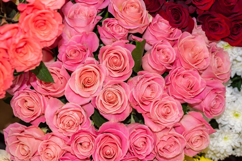 Bright pink roses in a flower shop. royalty free stock photo