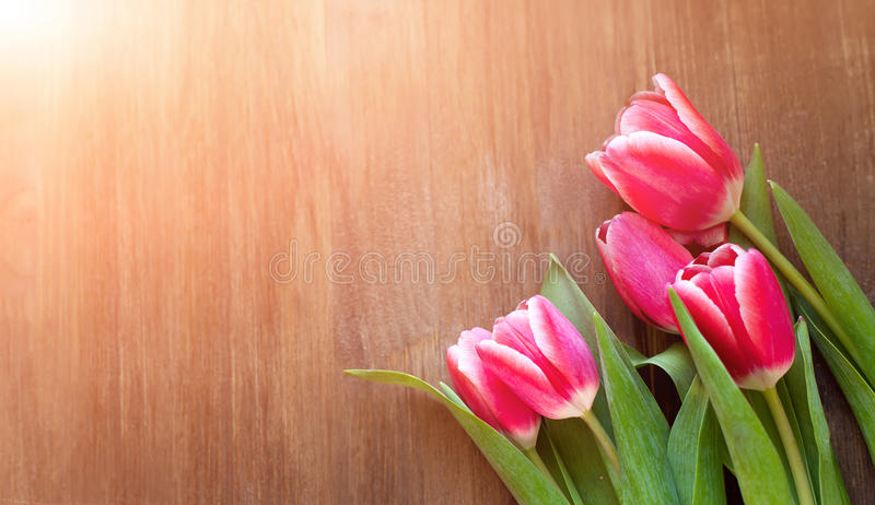 Bright pink tulips on natural wooden background, with the spray of the water, in honor of women`s day.  royalty free stock images