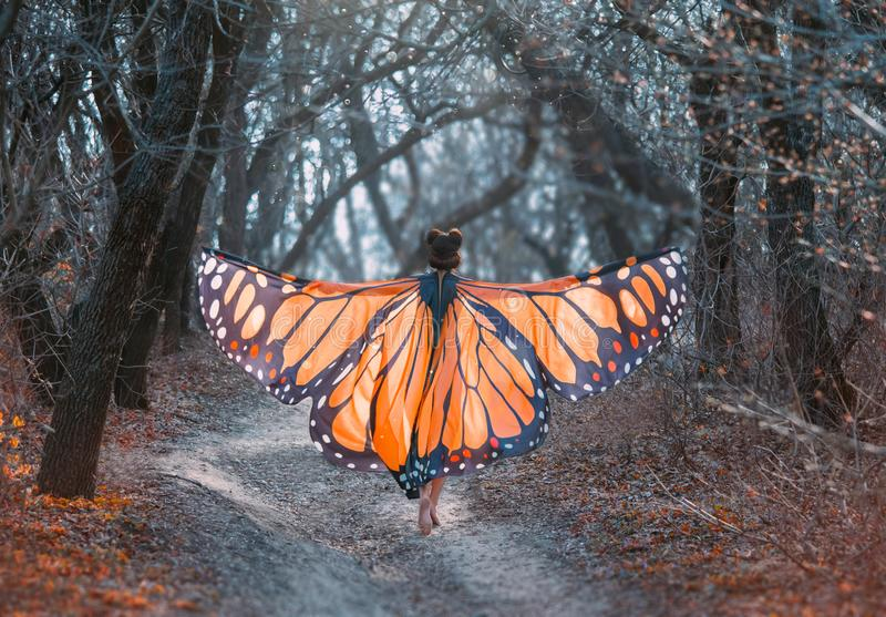 A bright, positive, sunny monarch butterfly, with huge wings, walks in a dark gray forest. Art photo from the back stock photography