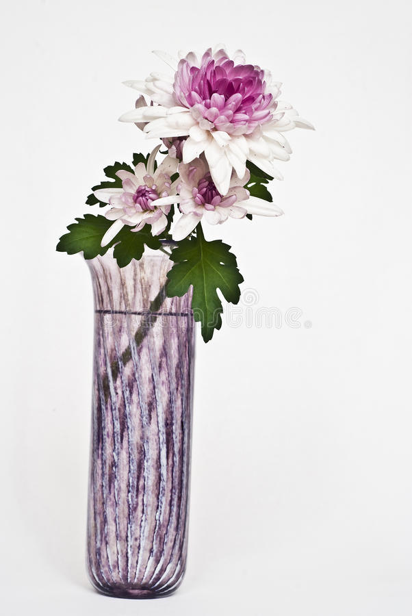 Bright purple flowers royalty free stock images