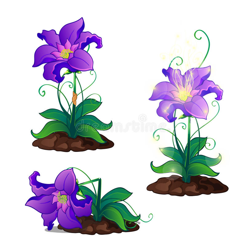 Bright purple magic flowers grows in ground royalty free illustration