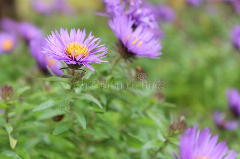 Bright purple and yellow flower royalty free stock images