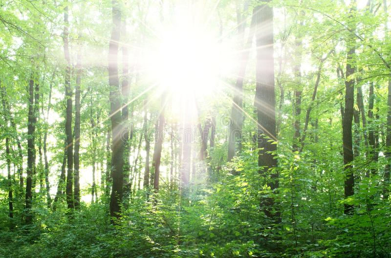 Download Bright rays stock image. Image of summer, landscape, season - 25312073