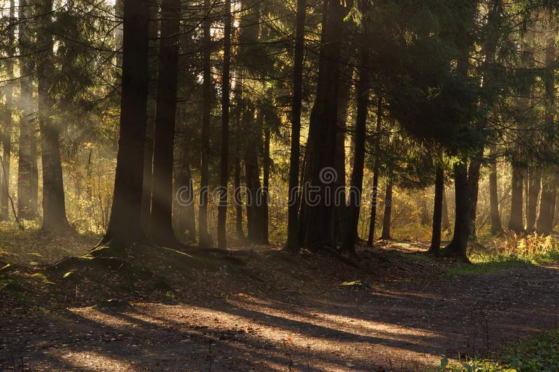The bright rays of the sun create shadows and lights on the path in the park royalty free stock photo