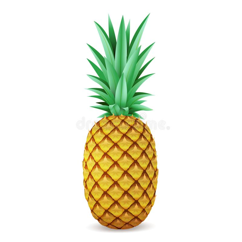 Bright realistic pineapple isolated on white background vector illustration