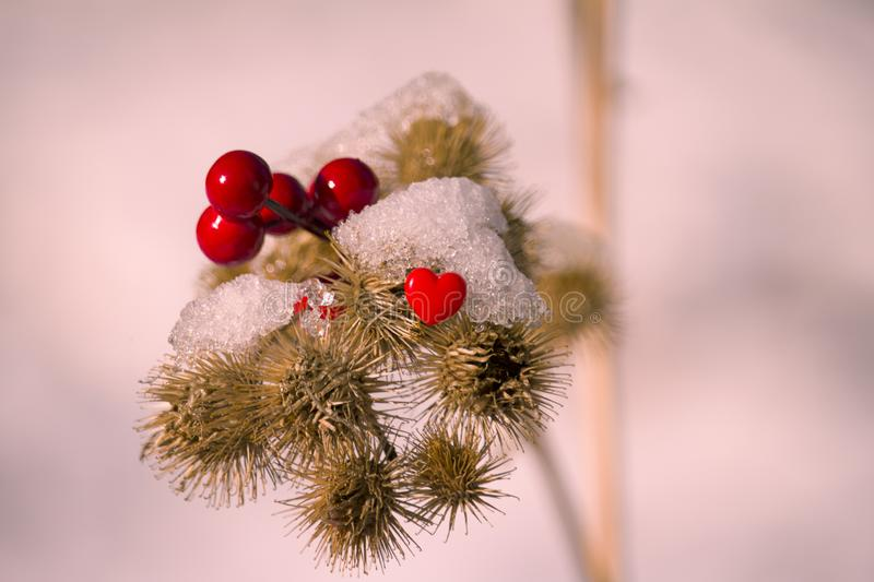 Bright red berries and heart stock photo