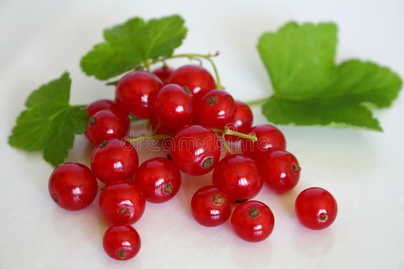 Bright red bunch of red currants and appetizing with its green leaves on white studio background royalty free stock photography