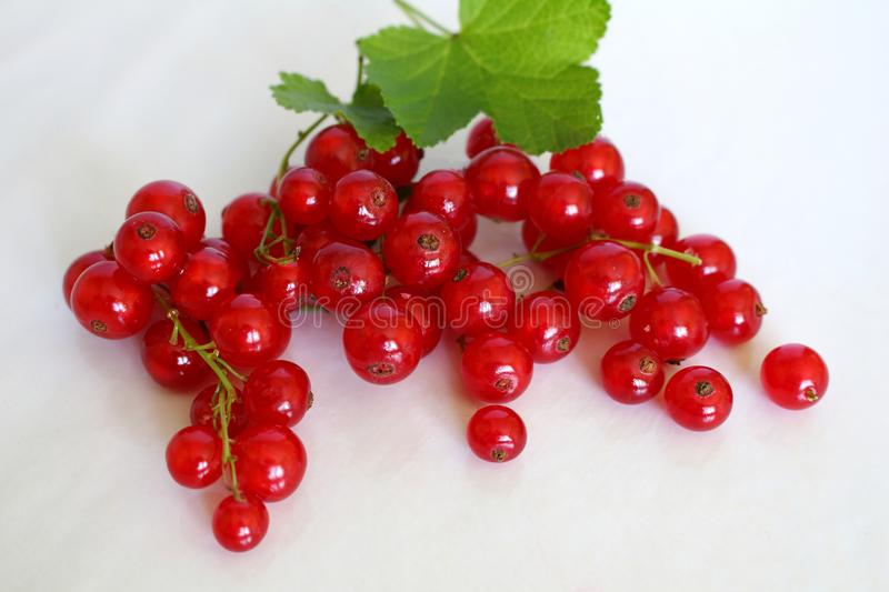 Bright red bunch of red currants and appetizing with its green leaves on white studio background stock photo