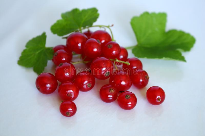 Bright red bunch of red currants and appetizing with its green leaves on white studio background stock image