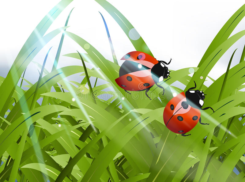 Bright red Lady Bug vector illustration