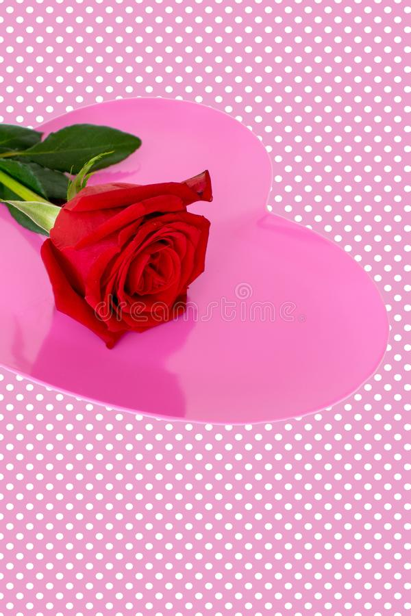 Red rose on pink heart with pale pink polka dot background stock photo