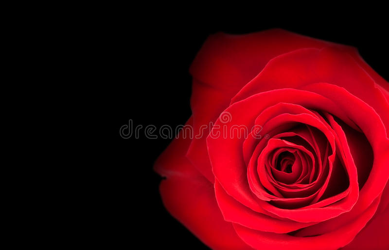 Download Bright red rosebud stock photo. Image of fresh, plant - 21796228